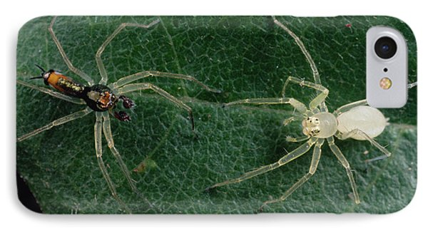Jumping Spider Colorful Male And Pale Phone Case by Mark Moffett