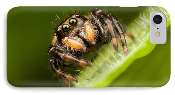 Jumping Spider Phidippus Clarus I Phone Case by Clarence Holmes