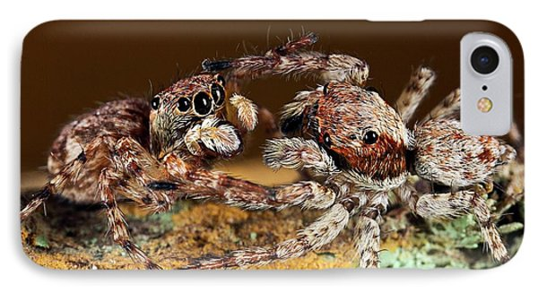 Jumping Spiders IPhone Case