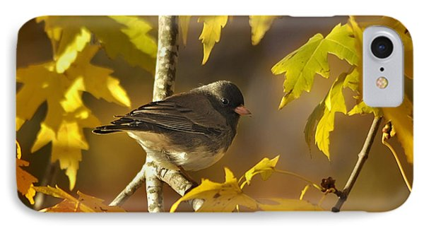 Junco In Morning Light IPhone Case