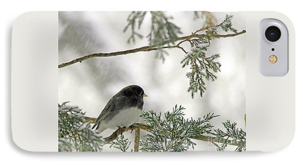 Junco In Snowstorm IPhone Case by Paula Guttilla