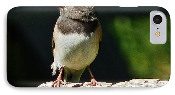 Junco Simplicity IPhone Case by VLee Watson