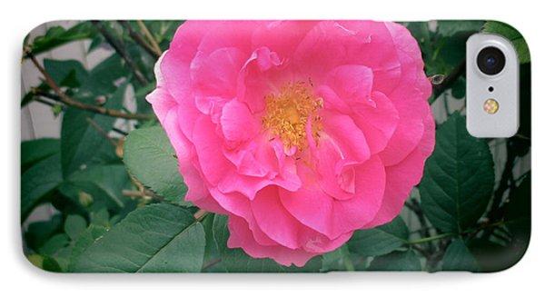 June Rose I IPhone Case