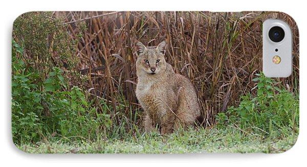 Jungle Cat (felis Chaus) In The Wild IPhone Case