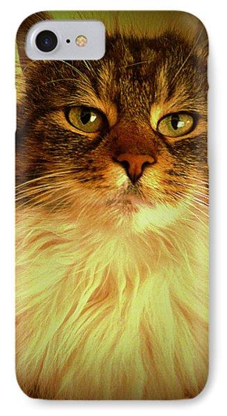 Just Cat IPhone Case