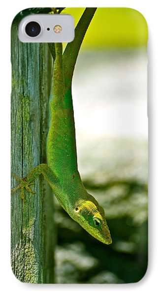 Just Hanging... IPhone Case by Lehua Pekelo-Stearns