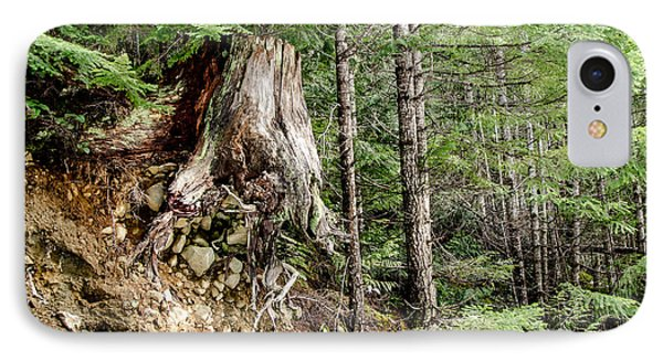 Just Hanging On Old Growth Forest Stump IPhone Case by Roxy Hurtubise