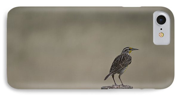 Western Meadowlark On A Fence Post IPhone Case