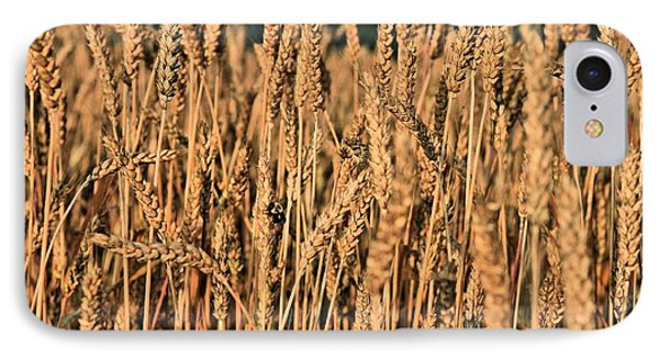 Just Wheat  Phone Case by JC Findley
