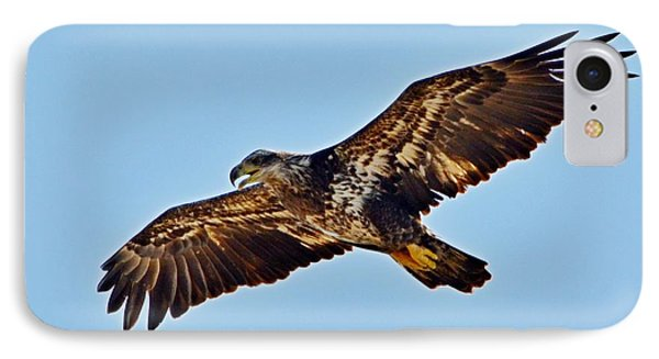 Juvenile Bald Eagle In Flight Close Up Phone Case by Jeff at JSJ Photography