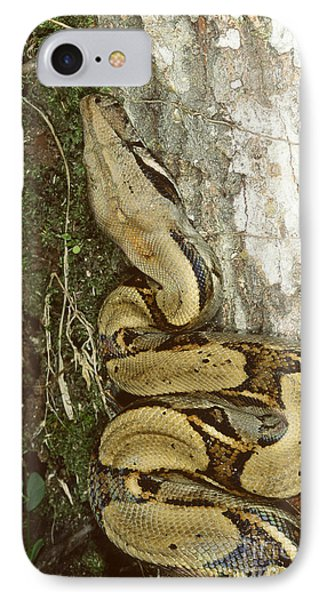 Juvenile Boa Constrictor IPhone Case by Gregory G. Dimijian, M.D.
