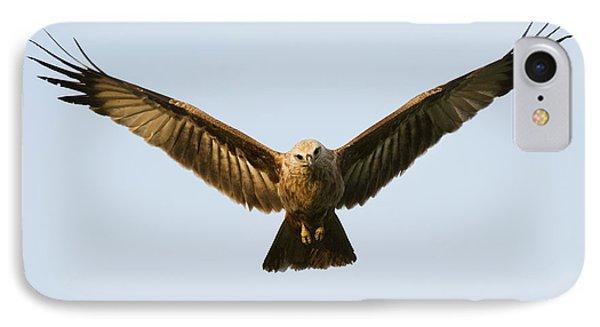 Juvenile Brahminy Kite Hovering Phone Case by Tim Gainey