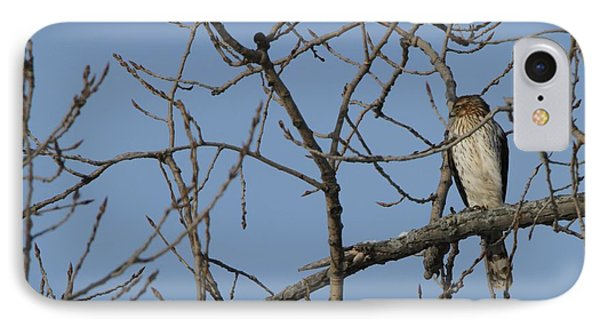 Juvenile Coopers Hawk On Tree Limb IPhone Case by Dan Sproul