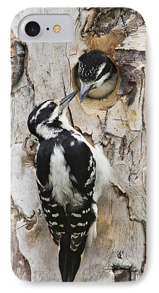 Juvenile Hairy Woodpecker Is Fed Phone Case by Ray Bulson