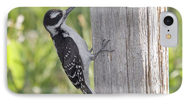 Juvenile Hairy Woodpecker Phone Case by Linda Freshwaters Arndt