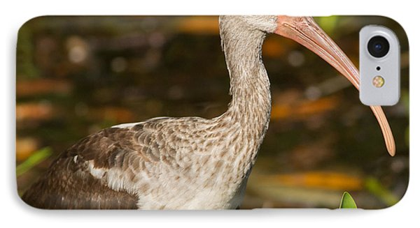 Juvenile Ibis In The Mangroves 2 IPhone Case by Natural Focal Point Photography