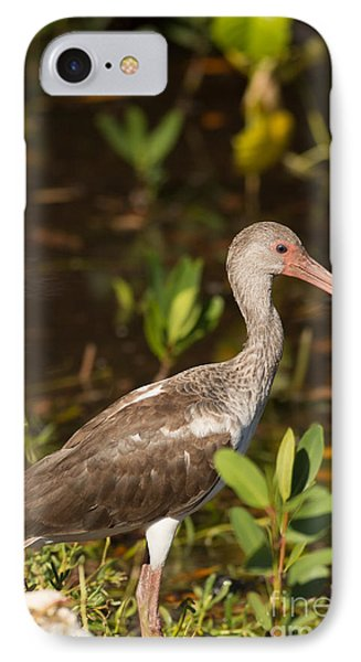 Juvenile Ibis In The Mangroves IPhone Case by Natural Focal Point Photography
