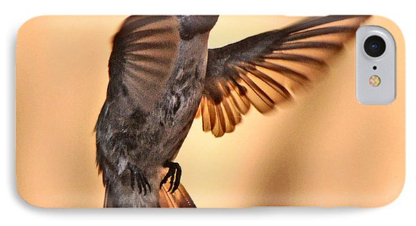 Juvenile Male Anna's In Flight IPhone Case by Jay Milo
