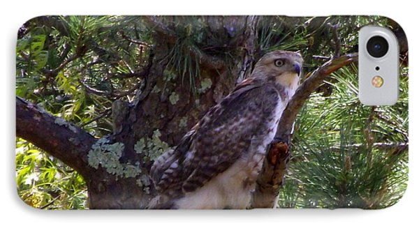 Juvenile Red-tailed Hawk Phone Case by CapeScapes Fine Art Photography