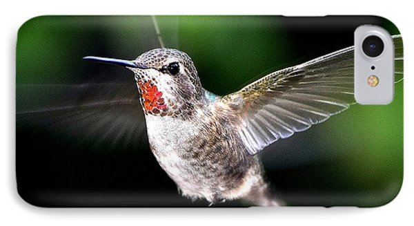 Juvenile Red Thoated Hummingbird IPhone Case by Jay Milo