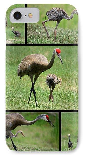 Juvenile Sandhill Crane Collage IPhone Case by Carol Groenen