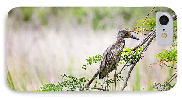 Juvenile Yellow Crowned Night Heron IPhone Case by Zoe Ferrie