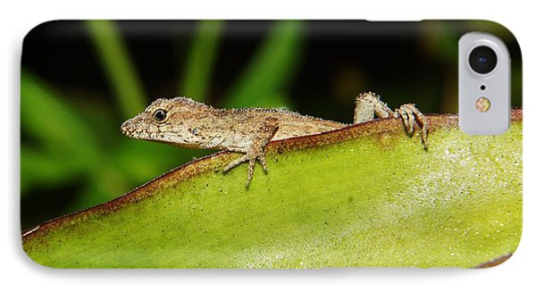 Juvie Brown Anole IPhone Case by Lynda awson-Youngclaus