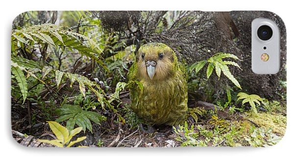 Kakapo Male In Forest Codfish Island IPhone Case