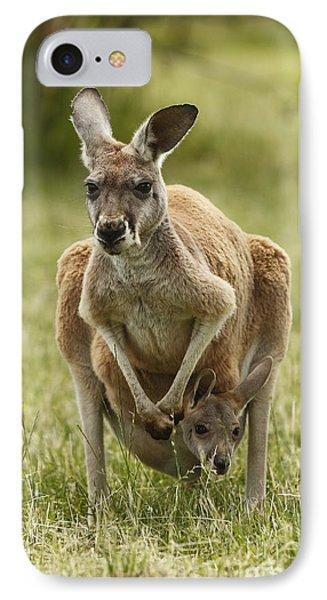 Kangaroo And Joey IPhone Case by Craig Dingle