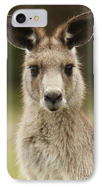 Kangaroo IPhone Case by Craig Dingle