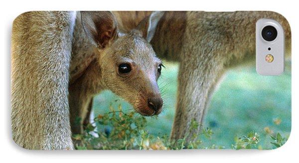 Kangaroo Joey IPhone Case by Mark Newman