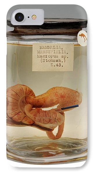 Kangaroo Stomach Specimen IPhone Case