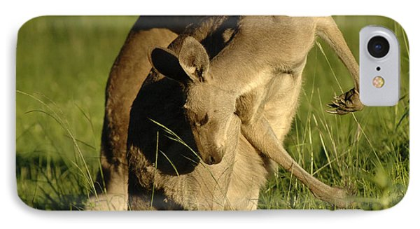 Kangaroos Taking A Bow IPhone Case by Bob Christopher