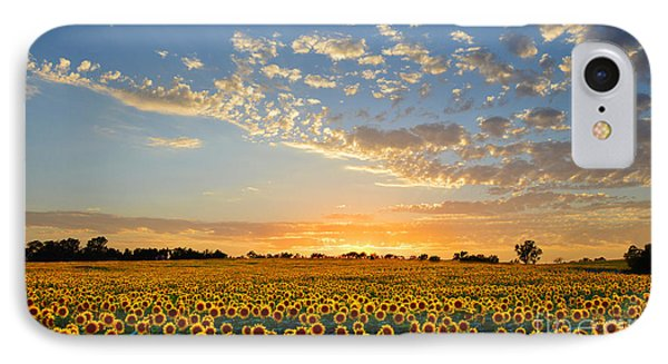 Kansas Sunflowers At Sunset IPhone Case by Catherine Sherman