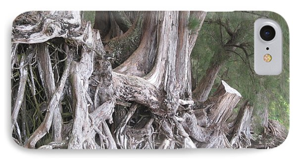 IPhone Case featuring the photograph Kauai - Roots by HEVi FineArt