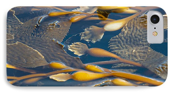 Kelp Haida Gwaii British Columbia Phone Case by Michael DeFreitas