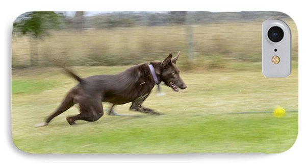 Kelpie Chasing A Ball Phone Case by Christopher Edmunds