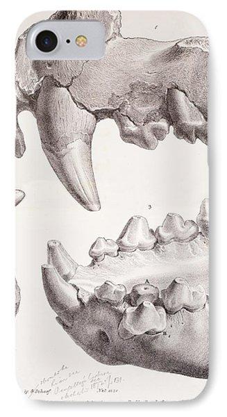 Kents Cavern Cave Lion Fossils IPhone Case by Paul D Stewart