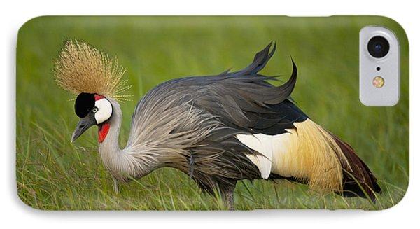 Kenya, Grey Crowned Crane In Ol Pejeta IPhone Case