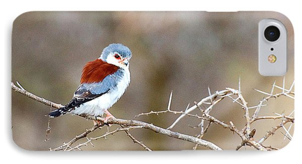 Kenya Pygmy Falcon Bird On Limb Credit IPhone Case