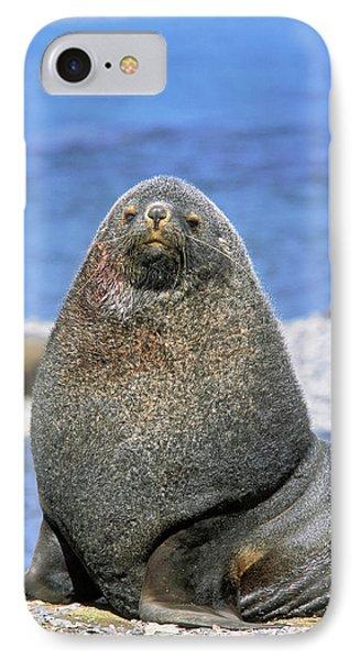 Kerguelen Fur Seal, Antarctic Fur Seal IPhone Case