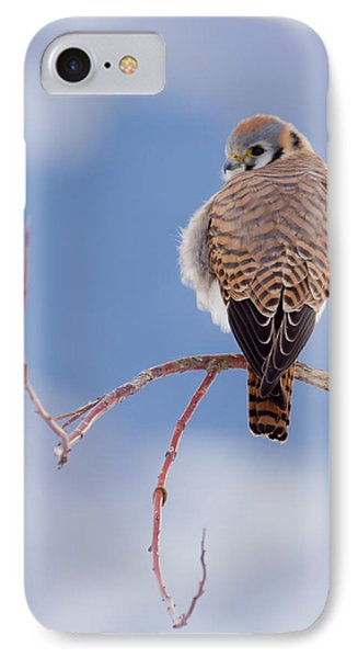 Kestrel In The Cold IPhone Case by Jeremy Farnsworth