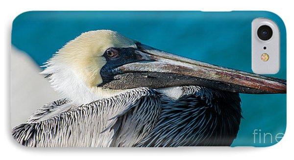 Key West Pelican Closeup - Panoramic IPhone Case