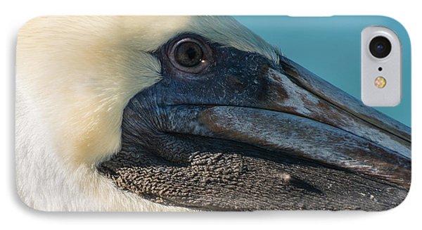 Key West Pelican Closeup - Square  IPhone Case