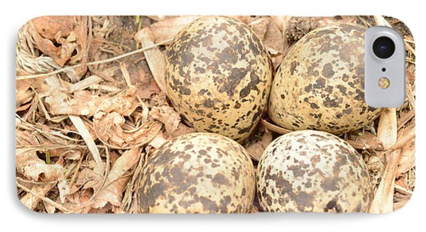 Killdeer Eggs IPhone Case by Dacia Doroff
