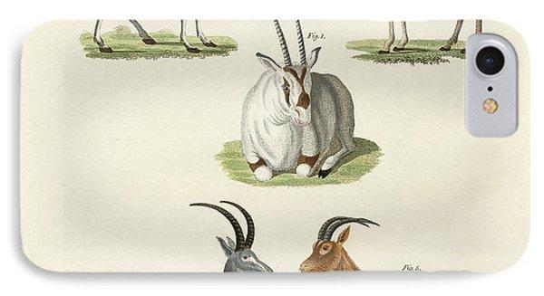Kinds Of Antilopes IPhone Case by Splendid Art Prints