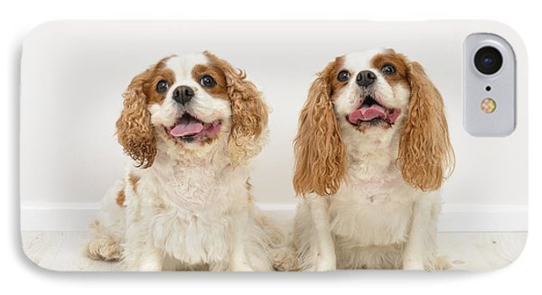 King Charles Spaniel Dogs IPhone Case by Amanda Elwell