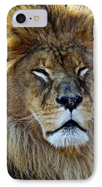King Of The Beasts IPhone Case by Frozen in Time Fine Art Photography