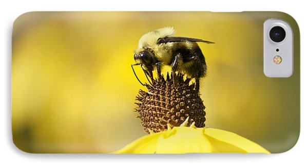 King Of The Coneflower IPhone Case by Penny Meyers
