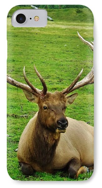 IPhone Case featuring the photograph King Of The Herd by Brigitte Emme
